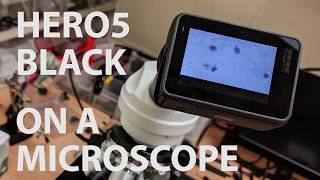 GoPro Hero5 on a Microscope