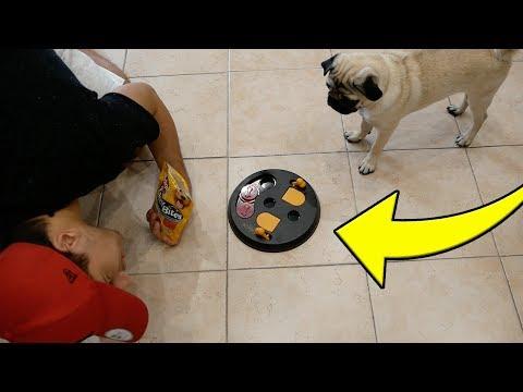 QUANTO E' INTELLIGENTE IL MIO CANE?? Test d'intelligenza per i cani!