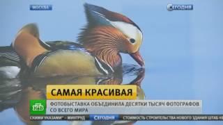 Выставка «Самая красивая страна». Телеканал «НТВ»