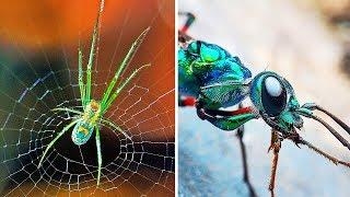 9 dziwnych stworzeń, które kontrolują umysły