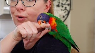 So You Think You Want a Lorikeet?!!!