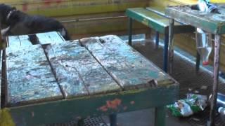 Спаниель Рома очищает дворы от мусора в посёлке шахты Берёзовская