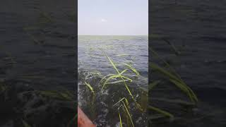 preview picture of video 'اهوار العراق..هور الحويزة.. محافظة ميسان'