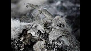 Aphonic Threnody — When Death Comes (2014)