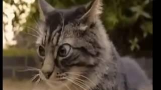 Смотреть видео приколы с котами 65