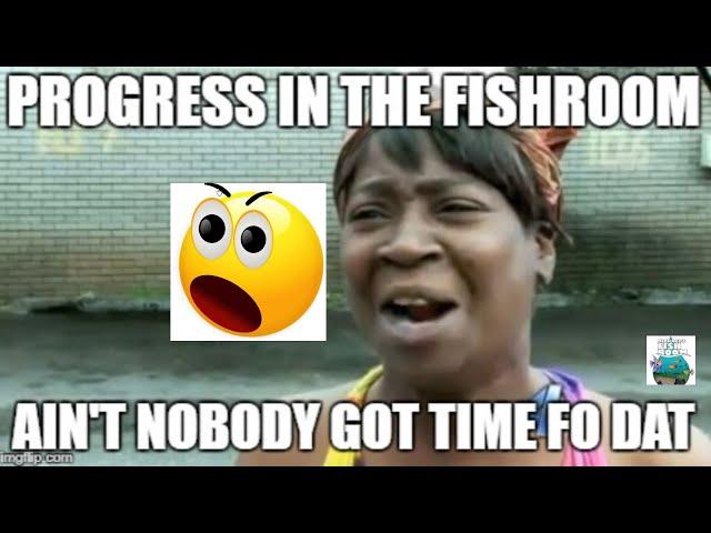 Progress in the Fish Room! Aquarium Fishroom VLOG
