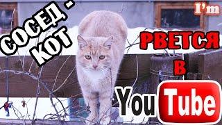Смешной кот. Эти забавные животные. Позитивное видео.