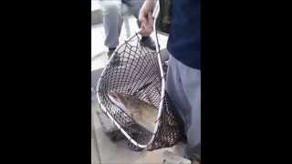 preview picture of video 'my 18-pound muskellunge fishing (mon maskinonge de 18 livres peche)'