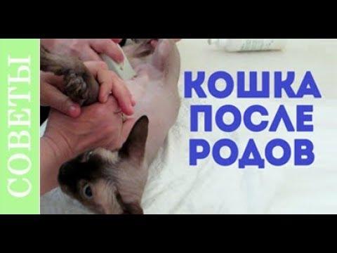Что случилось с кошкой после родов? Советы ветеринара.