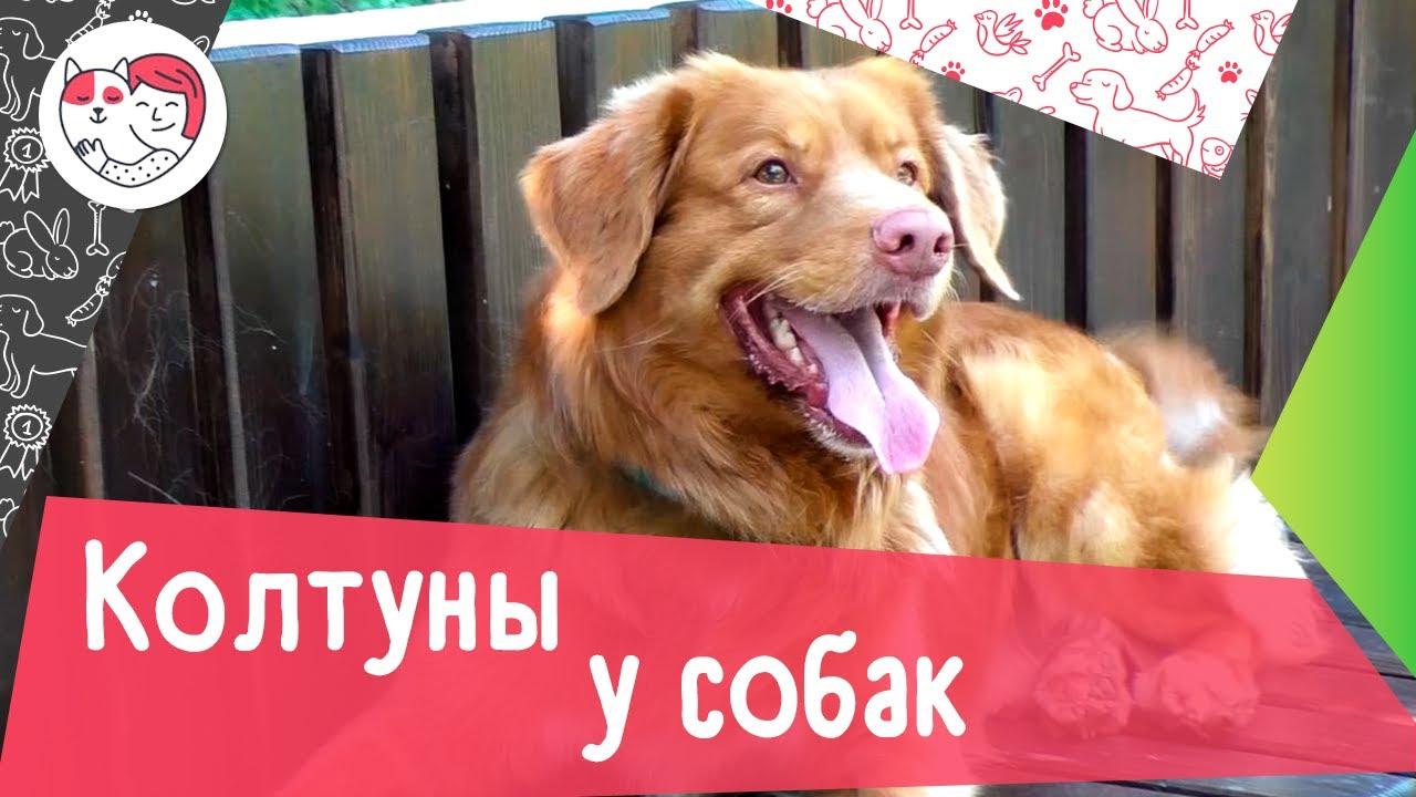 6 причин образования колтунов у собак