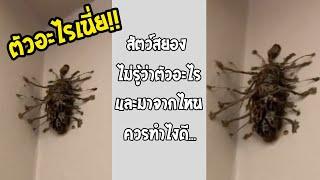แมลงที่คุณไม่เคยเห็น ถ้าเจอย้ายหนีออกจากบ้านได้เลย... #รวมคลิปฮาพากย์ไทย