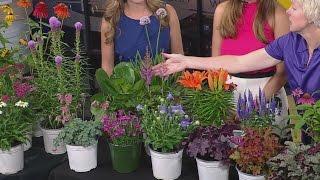 Maximize Your Garden Color With Perennials