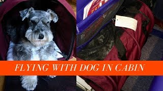 Flying with a Dog In Cabin    Taking my SturdiBag Large onto Southwest Boeing 737 Flight