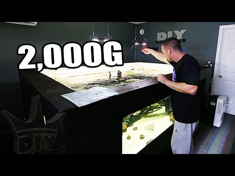 FEEDING MY MONSTER 2,000G AQUARIUM