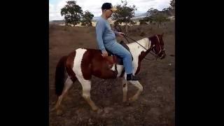 Equídeo Equino Diversos Não Registrado Cavalo Pampa - e-rural Imagens