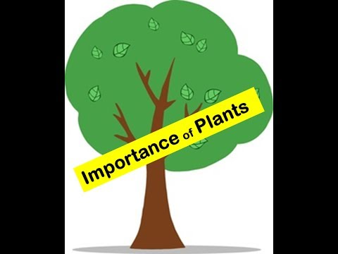 Importance of Plants to humans and animals in everydays life