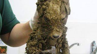 Workers Thought They'd Found A Muddy Puppy  But They Cleaned It Off And Got The Cutest Surprise