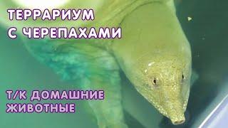 """Передача """"Террариум"""" - черепахи"""