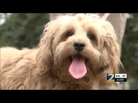 Cherokee County considering ban on selling dogs, cats in pet stores