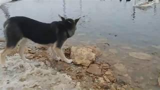 Такого Вы еще не видели. Собака и пшеница. Собака объедает лебедей. Птицы. Кормим птиц. Одесса. Dog.