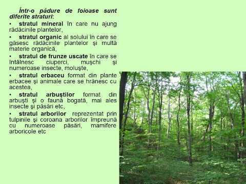 paraziți ai ecosistemului
