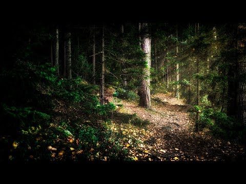 Wintersun - The Forest That Weeps