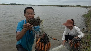 广西女网友千里来看望,小池第一次带着美女去抓鱼,抓到很多大货