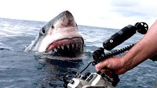 TOP 5 Aterradores Encuentros Con Tiburones Captados En Cámara || TOP 10 VÍDEOS
