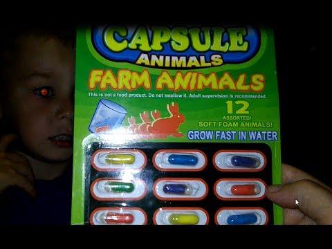 КАПСУЛЫ С РАСТУЩИМИ ЖИВОТНЫМИ/ЖИВОТНЫЕ ФЕРМЫ/GROWING CAPSULES ANIMALS