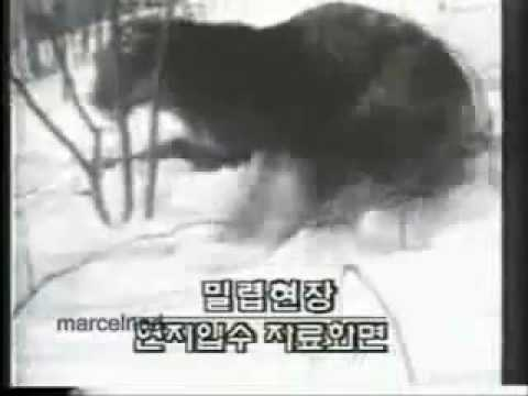 Siberian Tiger Vs Dog, Dog Wins