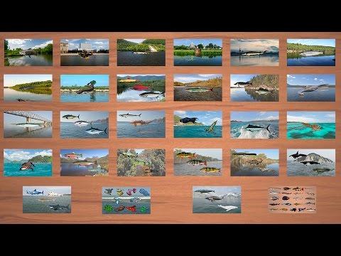 Русская Рыбалка 3.99 Навигация по рыбалке