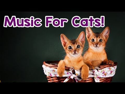Cat Music: 15 Hours! Help Calm Your Kitten Down! Relaxing Music for this Stressed Cats!