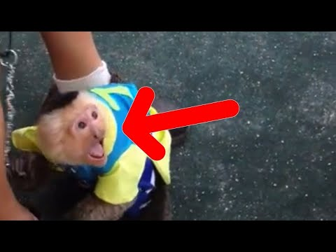 Circus Monkey Cries Out With Joy When He Reunites With The Human Who Treated Him Well