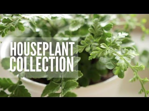 My Plant Collection | Easy & Low Maintenance Houseplants