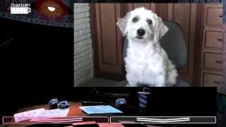 gameplay con curly el perro de fernanfloo en fvf 2