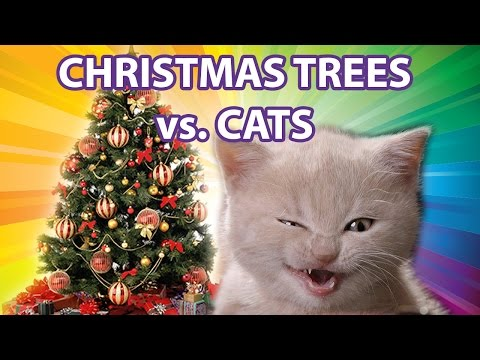 Er katten julens verste fiende?