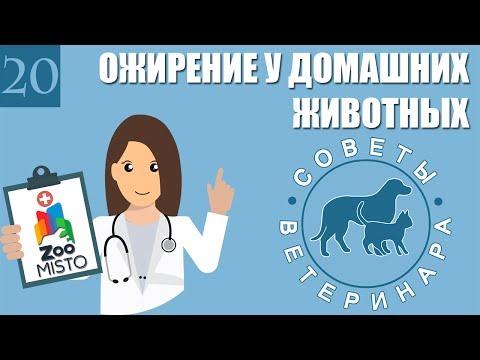 Ожирение у домашних животных | Причины ожирения | Почему ожирение опасно | Советы Ветеринара