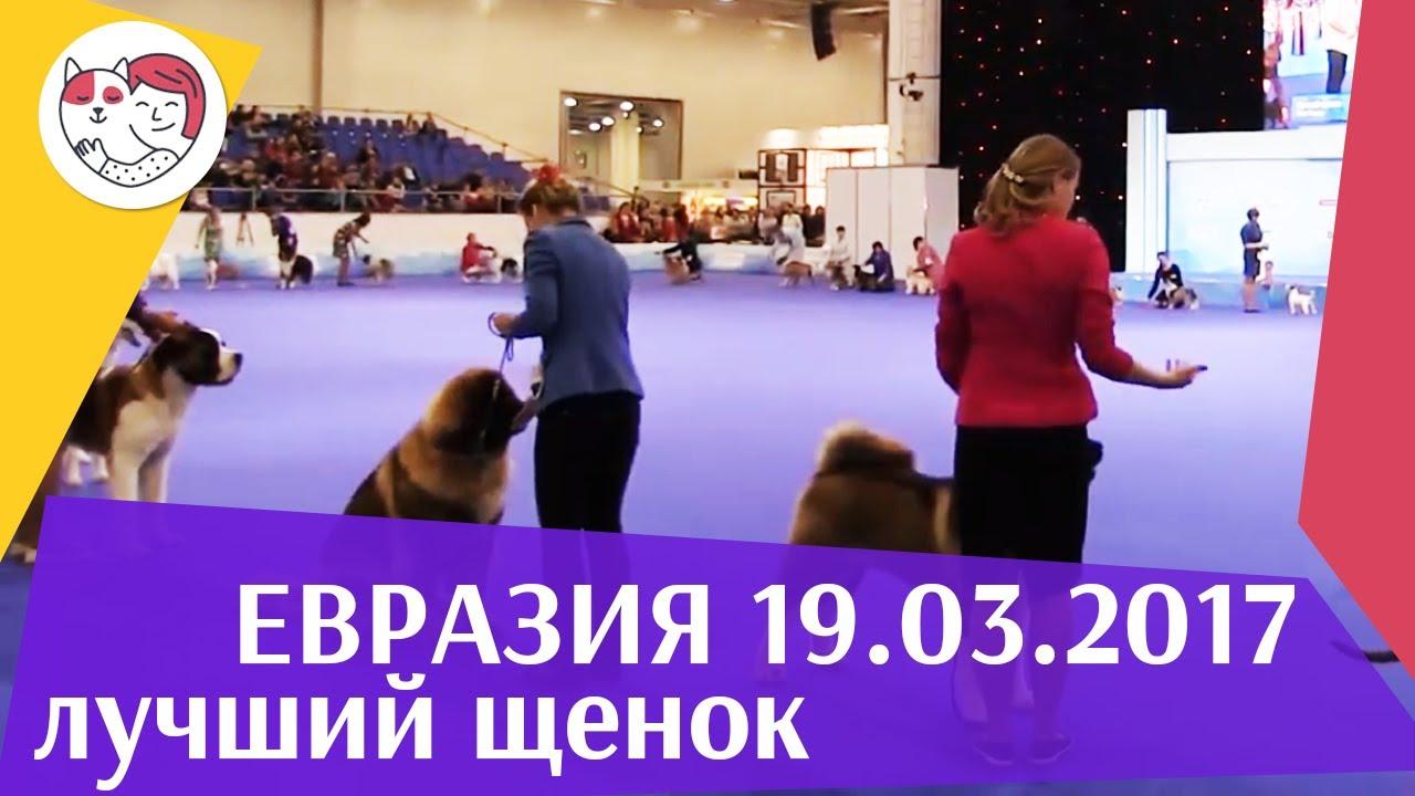 Best in show Лучший щенок 19 03 17 на Евразии ilikepet