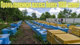 Промышленная пасека более 1000 семей. Как продавать мед много, красиво, дорого и очень дорого