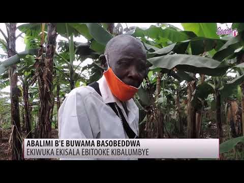 Ekiwuka ekisala ebitooke kilumbye ab'e Buwama