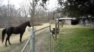 Horse and dog play together.