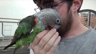 Cuddly Parrots - Kili & Truman Just Having Fun