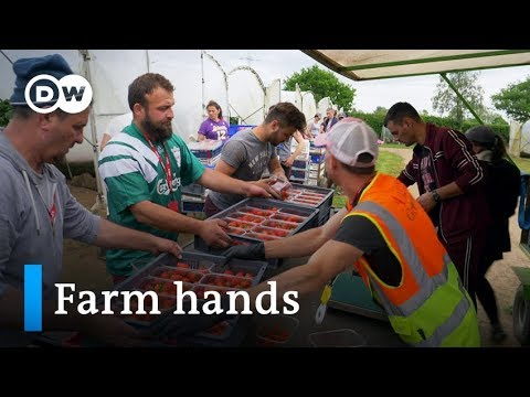 Scotland: Strawberry pickers, fear and Brexit | Focus on Europe