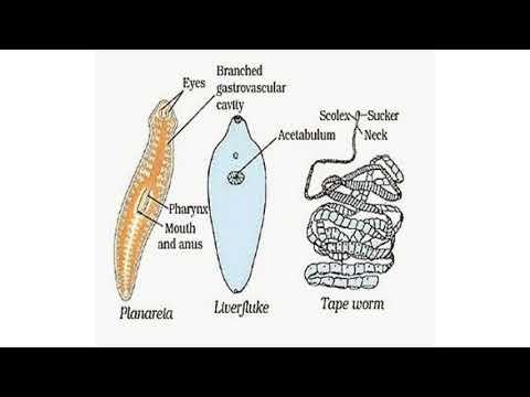 Esophageal papilloma endoscopy