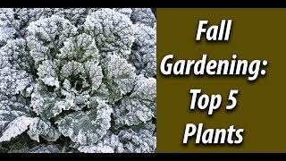 Fall Gardening: Top 5 Crops To Plant In The Fall (2019)