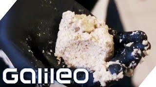 Mandel-Kokos oder Macadamia - Die Alternativen zur gewöhnlichen Milch | Galileo | ProSieben