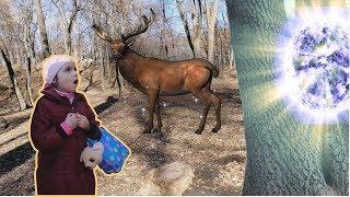 Волшебство в сказочном лесу мистическая история для детей