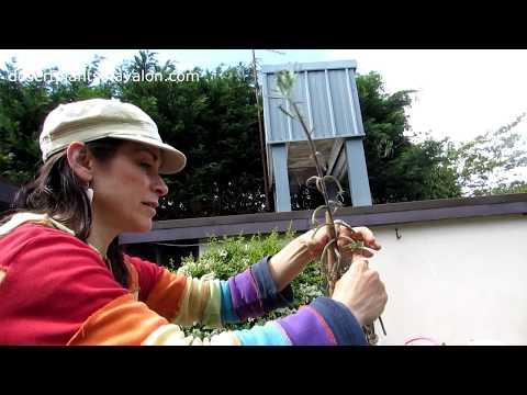 Masakit ba ang kuko halamang-singaw