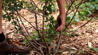 How to Prune Bushes & Shrubs | Lawn & Garden Care