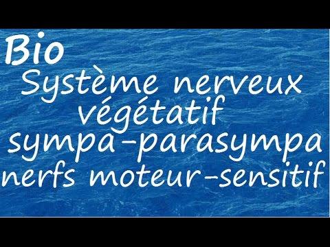 Les causes de lhypertension de la maladie